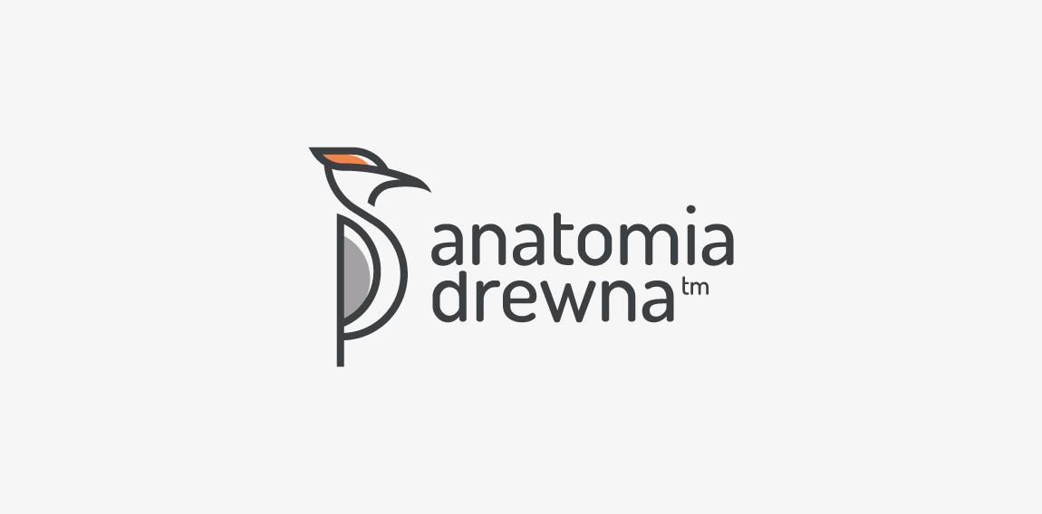 Anatomia Drewna
